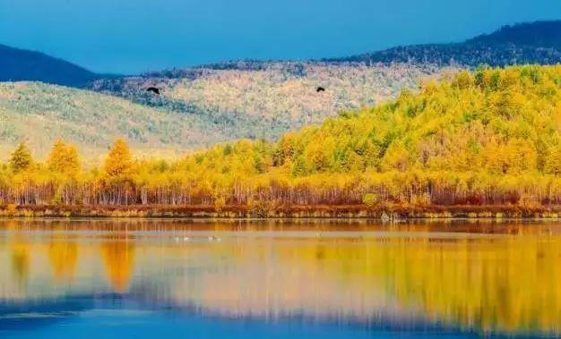 呼伦贝尔草原喂驯鹿+探索边防线+巴尔虎蒙古部落5日4晚私家团